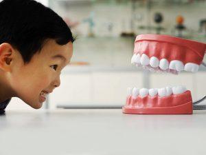 Periode Pertumbuhan Gigi